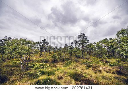 Wilderness Landscape With Grass And Wildflowers