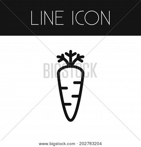 Root Vegetable Vector Element Can Be Used For Carrot, Root, Vegetable Design Concept.  Isolated Carrot Outline.