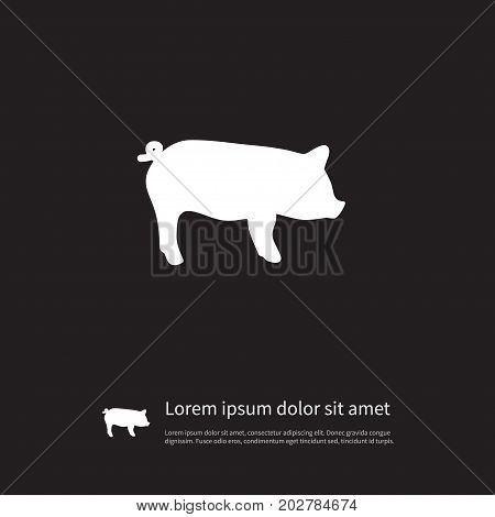 Swine Vector Element Can Be Used For Hog, Swine, Pig Design Concept.  Isolated Hog Icon.