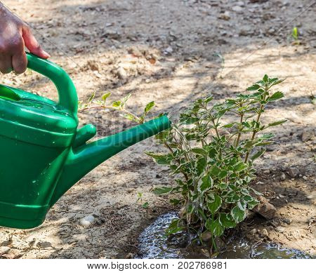 Water pouring from green watering can to garden natural plants