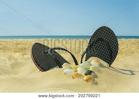Beach Slippers on the background of seashells - lot of shells of different sizes with beach Slippers