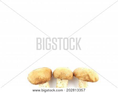Fresh Champignon Mushrooms Isolated On White Background
