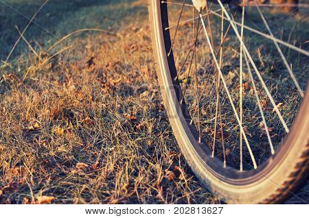 Bicycle wheel close-up on impassability in an autumn forest