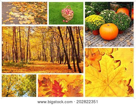 Collection of photos with autumn leaves, forest and apples