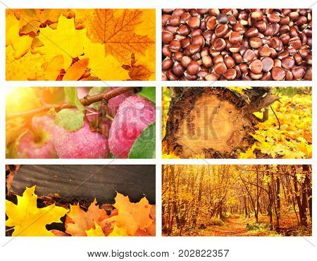 Collection of horizontal banners with autumn leaves, forest, chestnuts and apples