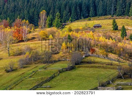 Agricultural Fields On Hillside Near Forest
