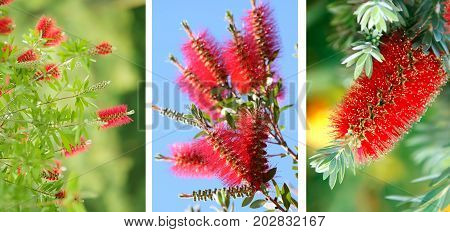 Bright and beautiful Australian native plants blossom