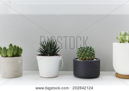 Cactus houseplant decorate minimal style