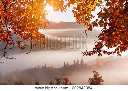 Foggy dawn in the autumn in the mountains.