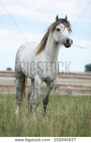 Beautiful Pony On Pasturage In Summer