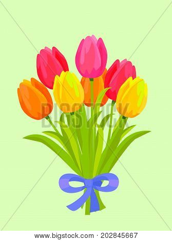 Big bouquet of colorful tulips. Yellow, orange, red and pink tulips bounded with blue ribbon flat vector. Spring flowers illustration with scented posy for romantic gift concepts, greeting cards