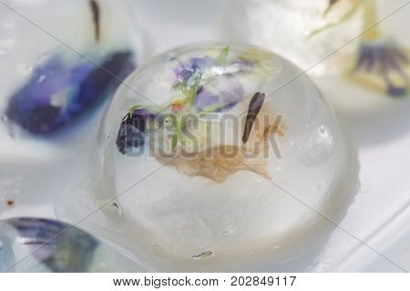 Jelly with edible flower inside - food decoration