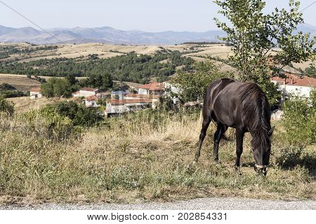Black horse grazing on the road on a sunny day
