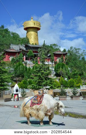 Big tibetian yak standing on the Shangri-La central square. Monastery and golden buddhist wheel on the background.