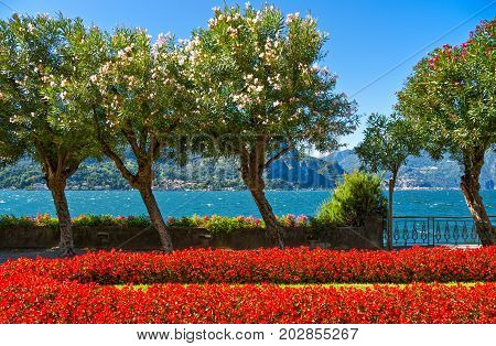 Italy Bellagio view of the Como lake from a garden