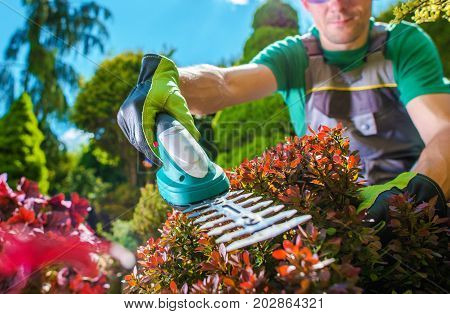 Garden Plants Trimming. Caucasian Men Trimming Rockery Garden Plants Using Electric Trimmer.