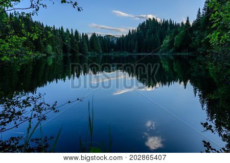 mirroring pond in the middle of a forest