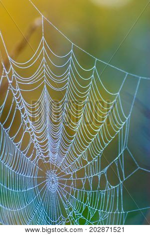 Giant spiderweb with morning dew in a morning light.