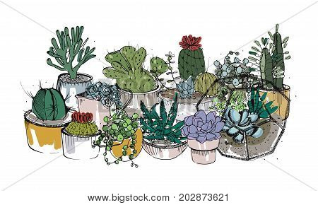Collection of hand drawn succulents, cactuses and other desert plants growing in pots and glass vivariums. Natural home decoration. Colored vector illustration.