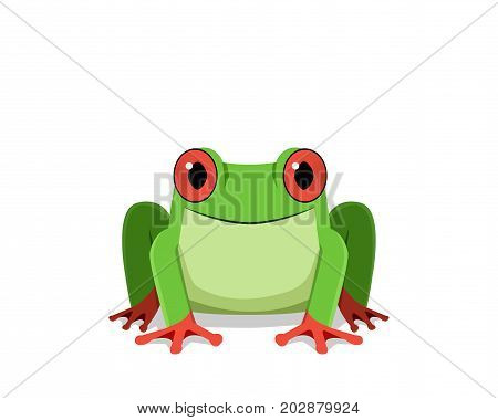 Red eye frog Front view vector design