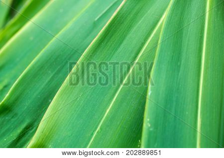 close up layer green leaf nature abstract background