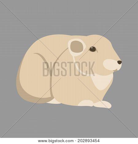 gundi  rodent  vector illustration style flat  side