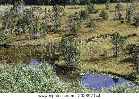 The bog of Luitel Lake in Chamrousse mountain range