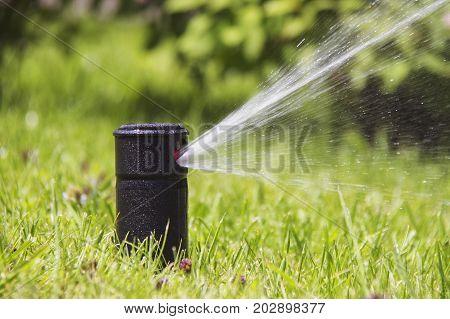 Lawn Sprinkler in Action. Garden Sprinkler Watering Grass. Automatic Sprinklers