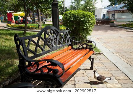 Wrought iron vintage bench with nobody except pigeon in a green summer park. Beautiful decorated retro style garden furniture in the sunlight