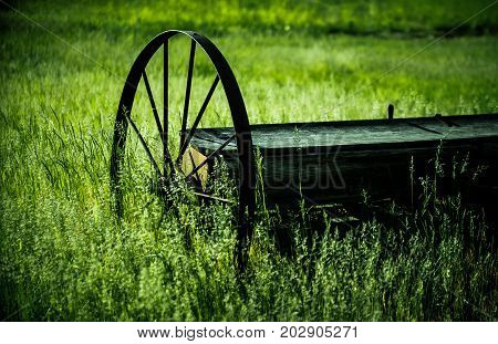New England wagon in a field of green grass