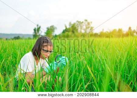 Girl hands holding magnifying glass in rice field concept natural explorer