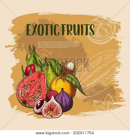 Exotic tropical fruits harvest of guava, figs or orange and lichee, carambola starfruit or maracuya passion fruit and papaya and dragon fruit with mango. Vector sketch poster template for fruit market