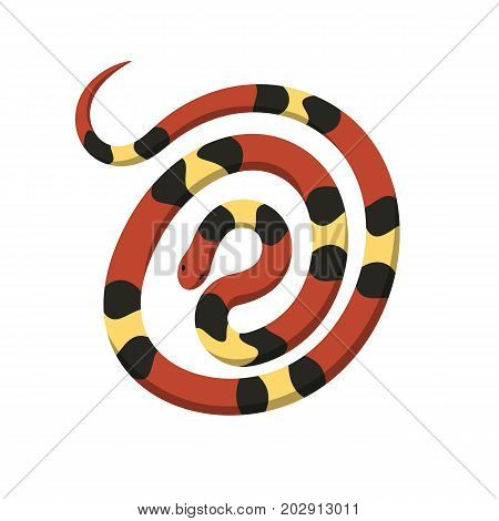 Rolled in spiral circle coral or milk snake top view icon. Creeping scarlet kingsnake flat vector isolated on white background. Crawling poisonous reptile illustration for wild nature concepts, zoo ad
