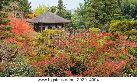 Ginkakuji Temple At Autumn By Top View