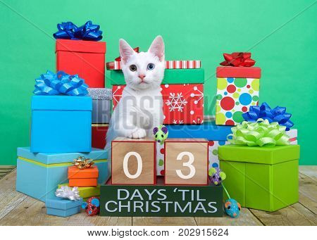 One fluffy white kitten with heterochromia odd-eyed sitting on brown wood floor surrounded by colorful presents with bows. Toy mice and countdown to Xmas blocks. 3 days til Christmas