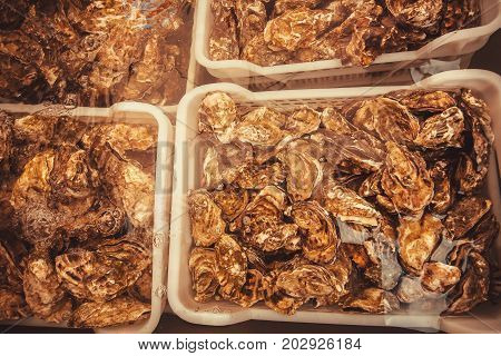 Assorted fresh mollusks in water of seafood market
