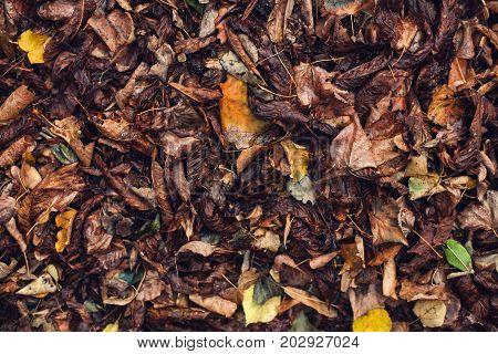 Dry, Fallen Leaves.