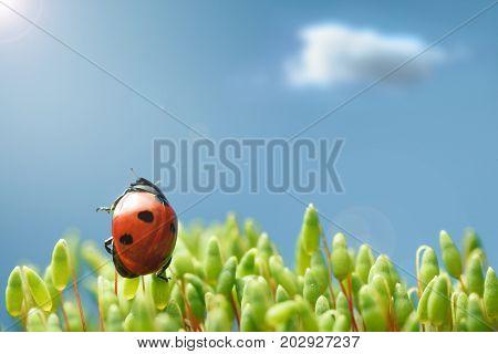 Ladybug Raise To Sun
