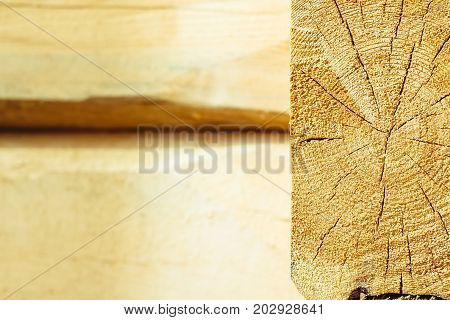 Sawed oak tree trunk. Cross section of the timber. Firewood stack for the background. Close up pile of logs. Stack of freshly cut oak timber. Annual rings on the end of tree trunks