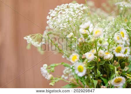 Beautiful blurred wild chamomile flowers against the wooden background (very shallow DOF selective focus) copyspace on the left