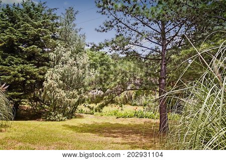 In the arboretum on the hillside palm trees pine trees and other subtropical plants on a clear Sunny day. The Black sea coast Russia Sochi.