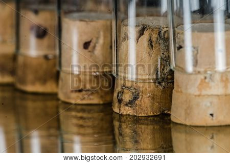 Inverted Corked Vials Standing in a Row