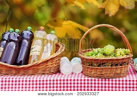 Freshly pressed must grape juice or young wine in bottles near a basket of grapes on a table.