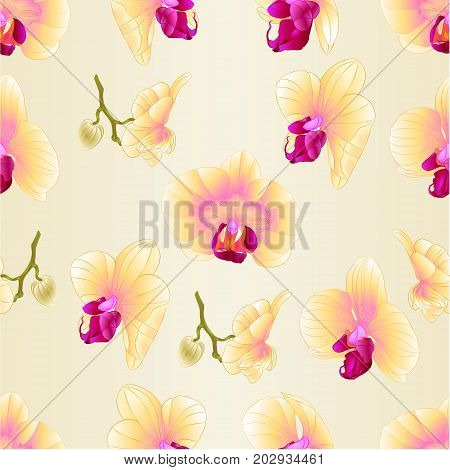 Seamless texture yellow Orchid Phalaenopsis flower closeup vintage vector editable illustration hand draw