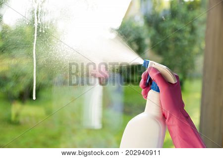 Female hands in pink gloves cleaning window with yellow rag and spray detergent. Spring cleanup housework concept