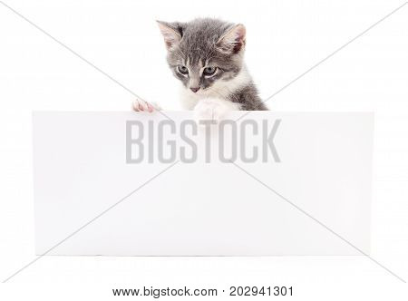 Kitten hanging over blank posterboard you add the message.