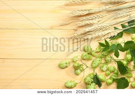 Beer Brewing Ingredients Hop And Wheat Ears On Light Wooden Table. Beer Brewery Concept. Beer Backgr