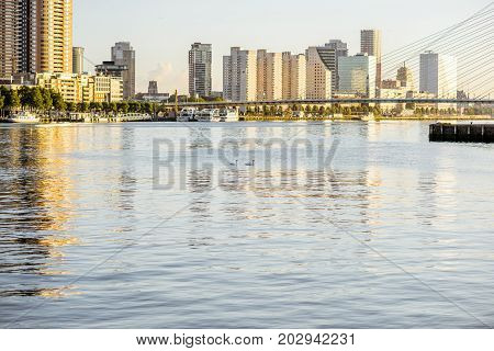 Landscape view on the beautiful riverside with skyscrapers and swans in the water during the morning in Rotterdam city