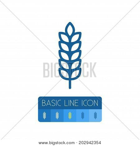 Spike Vector Element Can Be Used For Barley, Spike, Sheaf Design Concept.  Isolated Barley Outline.