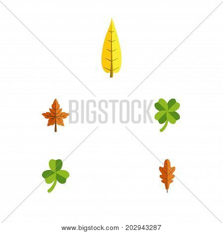 Flat Icon Foliage Set Of Linden, Alder, Leafage And Other Vector Objects